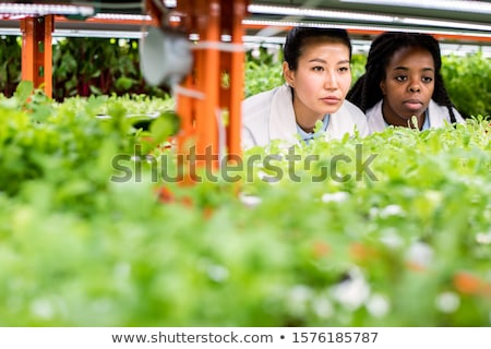 Multicultural group of female researchers looking at seedlings on shelf Stock photo © pressmaster