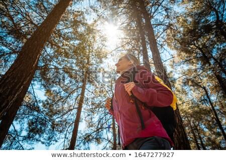 женщину походов южный лес высокий соснового Сток-фото © Kzenon