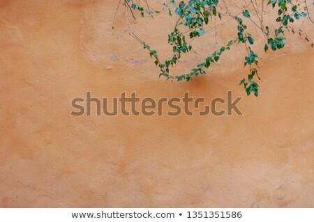 Hera laranja estuque parede verde planta Foto stock © Melvin07