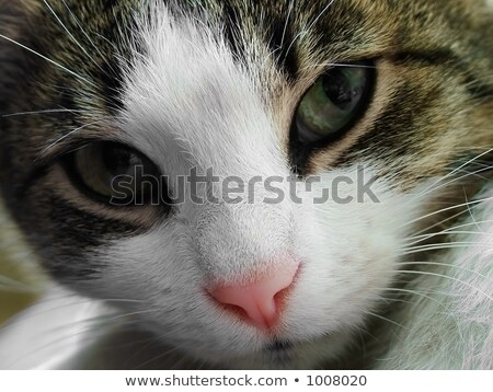 Extreme close up of cat's nose and mouth Stock photo © backyardproductions