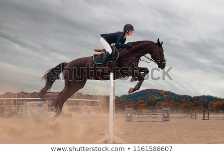 equestrian Stock photo © phbcz