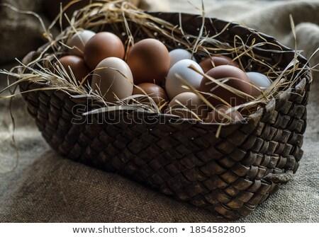 brown egg on straw bedding stock photo © azamshah72