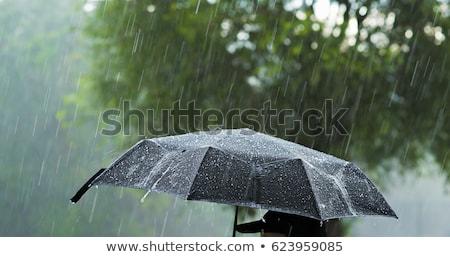rain drops on tissue Stock photo © smithore