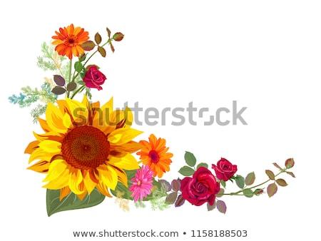 Sunflower in corner Stock photo © BSANI