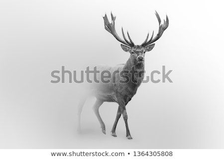 deers in the fog Stock photo © adrenalina