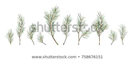 Big Pine Tree in the Autumn Forest Stock photo © maxpro