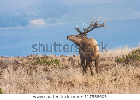 Bűn víz tavasz fű tájkép tehén Stock fotó © jarp17