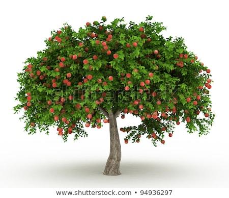Stockfoto: Geïsoleerd · appelboom · winter
