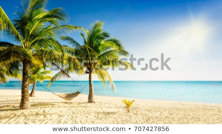 tengerpart · édenkert · pálmafa · akasztás · gyönyörű · jelenet - stock fotó © ruslanomega