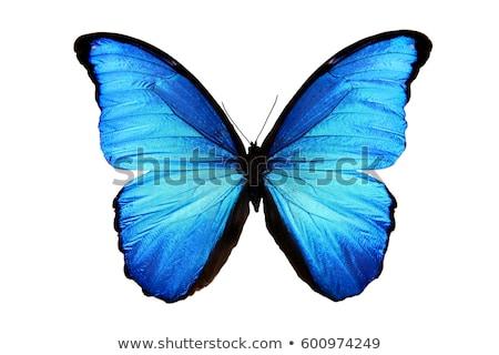 青 · 蝶 · 緑色の葉 · 翼 · 目 · デザイン - ストックフォト © compuinfoto