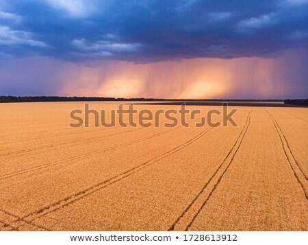 dramatic view stock photo © mycola