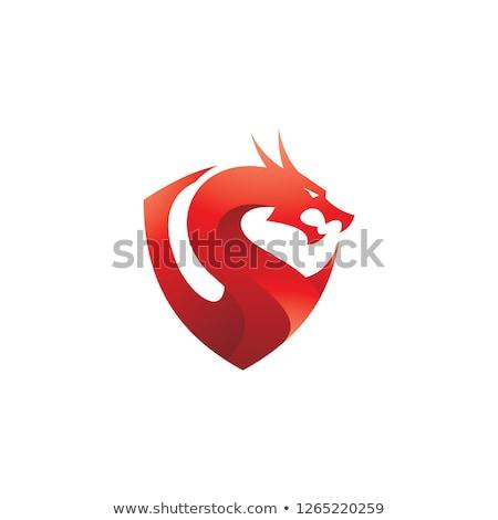 Tarcza ilustracja ognisty smoka głowie Zdjęcia stock © fmuqodas