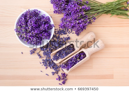 Zdjęcia stock: Lawendy · kwiaty · świeże · wyschnięcia · suszy · biały