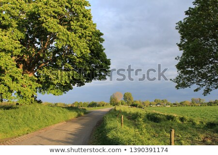 solitaire tree at sunset stock photo © olandsfokus
