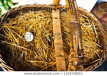 solitário · ovo · pássaro · ovos · ninho · páscoa - foto stock © aza
