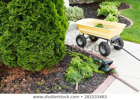 Garden tools used to trim arborvitaes Stock photo © ozgur