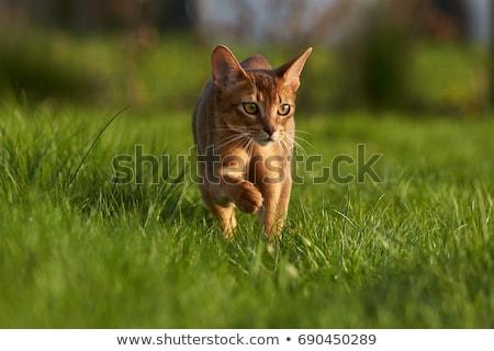 kedi · ağaç · mobilya · kırmızı · siyah · genç - stok fotoğraf © ivz