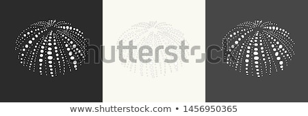 Stock photo: Shell of Sea Urchin or urchin