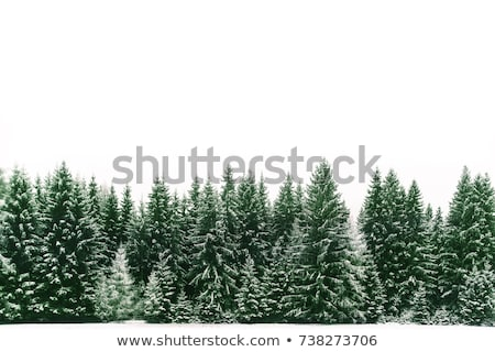 Snow-covered trees in a forest Stock photo © Kotenko