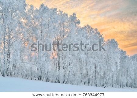 冷ややかな 山 冬 風景 グループ ストックフォト © Kotenko