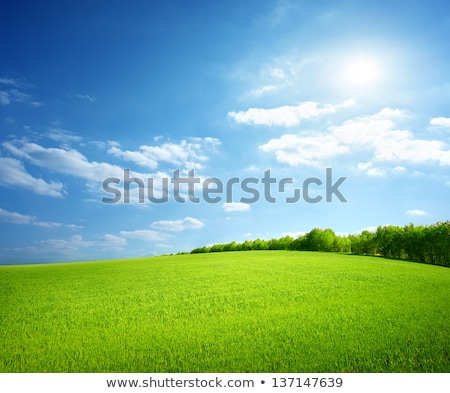 Field Of Wheat Trees And Perfect Blue Sky Stok fotoğraf © givaga