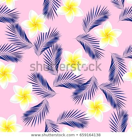 frangipani plumeria flower eps 8 stock photo © beholdereye