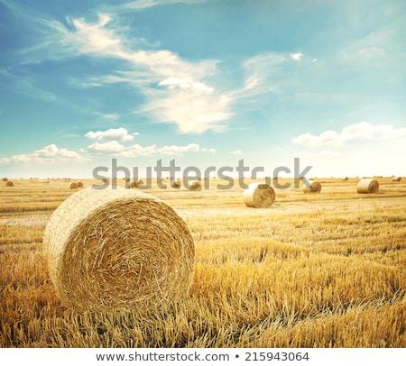 aratás · mező · széna · gazda · gépi · zöld · fű - stock fotó © lincolnrogers