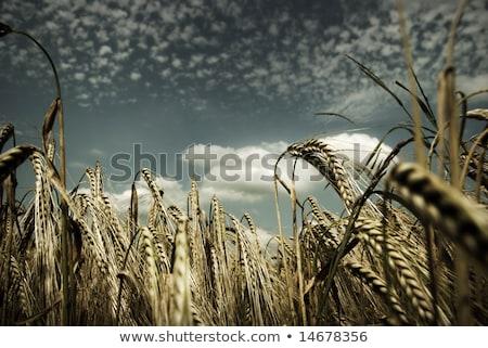 hierba · verde · vista · luz · del · sol · primavera · naturaleza - foto stock © stevanovicigor
