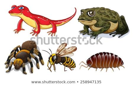 5 野生動物 実例 芸術 象 熱帯 ストックフォト © bluering