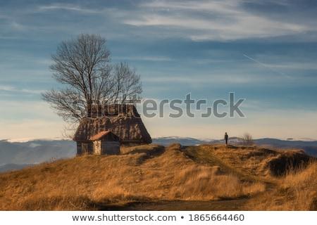 Foto stock: Edad · árbol · sol · montana · pueblo · desnudo