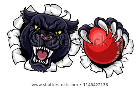 siyah · panter · kriket · maskot · öfkeli · hayvan - stok fotoğraf © krisdog