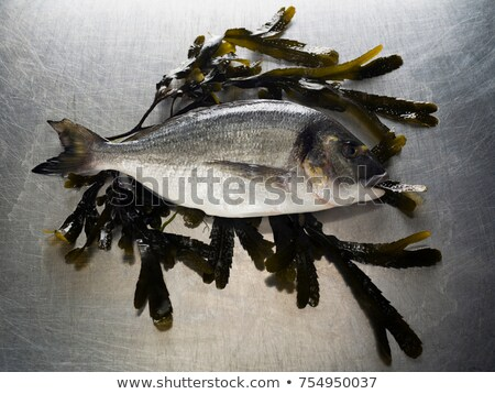 Posiedzenia bed wodorost żywności zwierząt świeże Zdjęcia stock © IS2