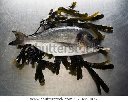Sessão cama alga comida animal fresco Foto stock © IS2