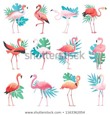 Flamingo · couleur · pour · aquarelle · isolé · vecteur · exotique · oiseau - photo stock © marysan