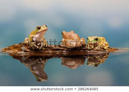Három zöld víz természet tájkép művészet Stock fotó © colematt