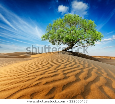 dunes in the desert with green tree stock photo © vapi