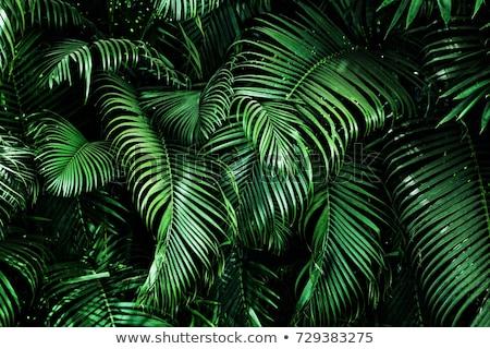 Estate banner foglie di palma gradiente ragazza Foto d'archivio © barbaliss
