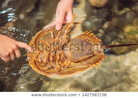 カニ · 水生の · クラス · 名前 · 長い · 尾 - ストックフォト © galitskaya