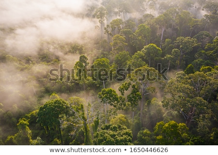 Erdő tartalék park éjszaka tűlevelű hegyek Stock fotó © barsrsind