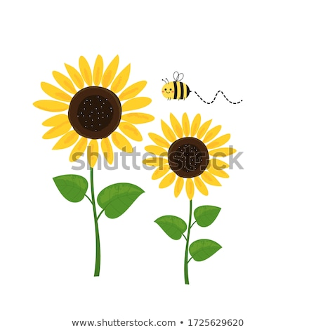 Abstract Sunflower Stock photo © curaphotography