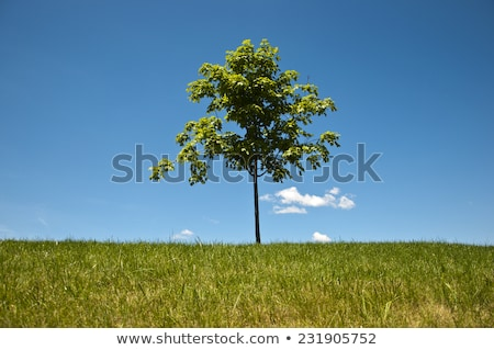 трава Blue Sky фон искусства Живопись рисунок Сток-фото © zzve