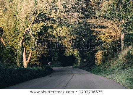 Verkeer auto rijden snel scherp draaien Stockfoto © lightpoet
