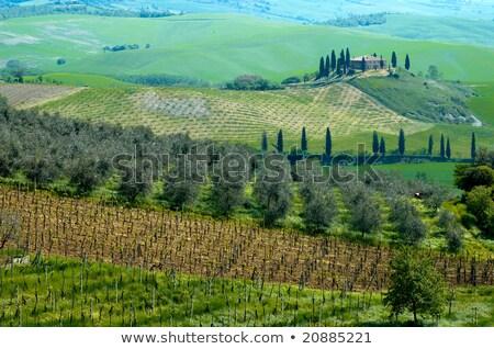 Hilly landscape near Pienza, Tuscany, Italy Stock photo © fisfra