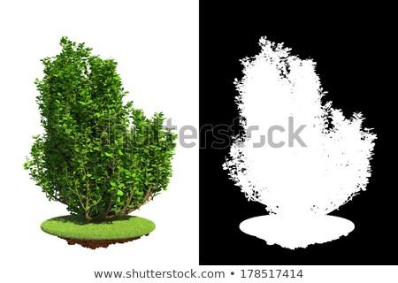 Izolált tavasz bokor részlet maszk fehér Stock fotó © tashatuvango