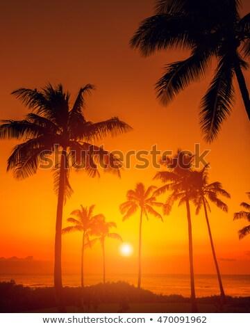 orange tropical sunset stock photo © smithore