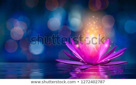 蓮 · 花 · ピンク · 花弁 · 湖 - ストックフォト © vinodpillai
