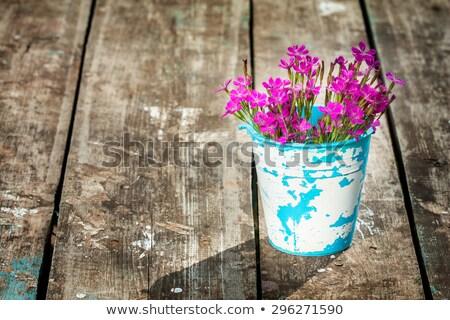Bitkiler eski sürahi yeşil yaprak taş Stok fotoğraf © ankarb