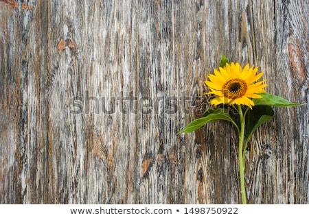 tournesols · vase · bouquet · jaune · métal · fleurs - photo stock © ivonnewierink