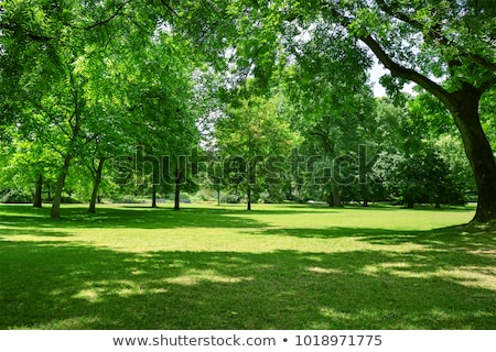 Green trees in park and sunlight stock photo © Ava