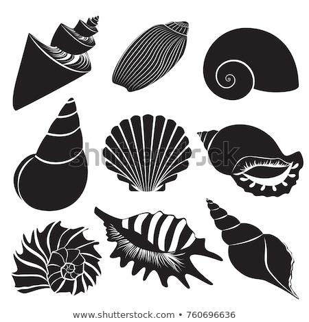 シルエット 海 シェル 描いた 定型化された ストックフォト © blackmoon979